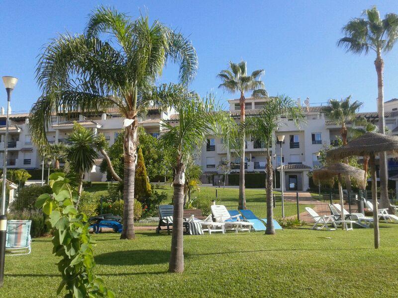 Palmeras jardines y piscinas borrego for Jardines y piscinas borrego