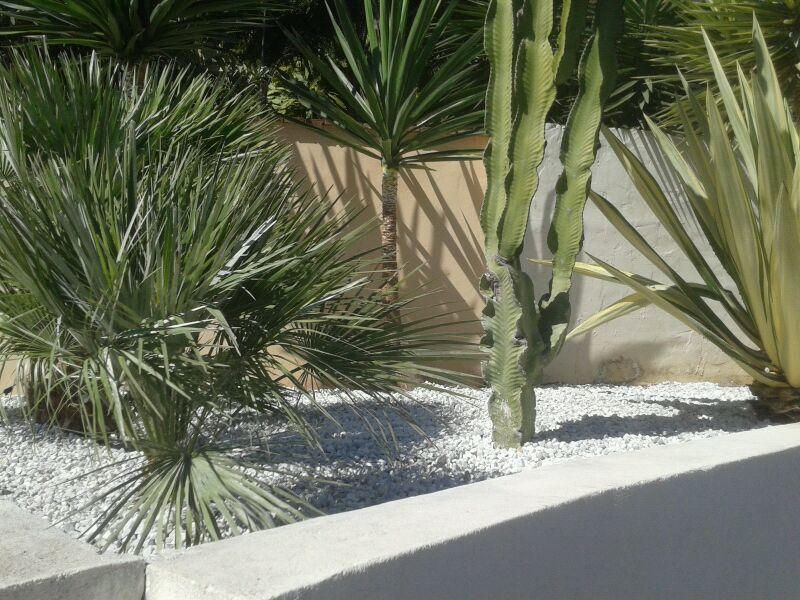 Cactus jardines y piscinas borrego for Jardines y piscinas borrego